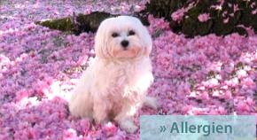 Bioresonanztherapie bei Allergien